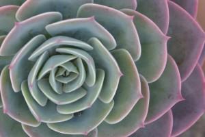 madera-flowers_Aneta Siejka